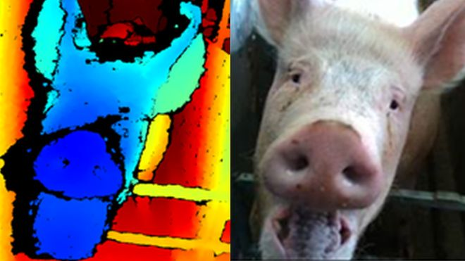 How's my pig? Using facial recognition technology to improve animal wellbeing