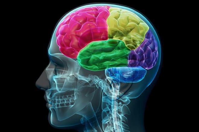 ravenous_brain_rect