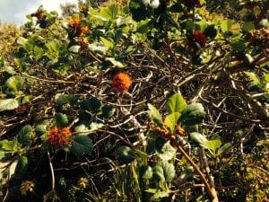 a photo of a green hedgerow in the sun with orange flowers