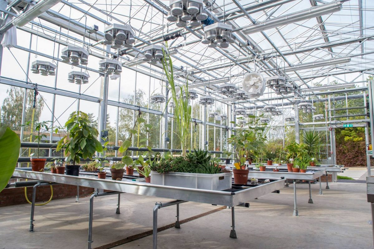 Plants grown from seeds that orbited earth to go on show at national event