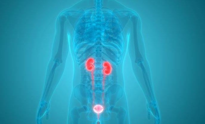 Research undertaken at UWE Bristol could reduce the need for precautionary antibiotics when it comes to Urinary tract infections