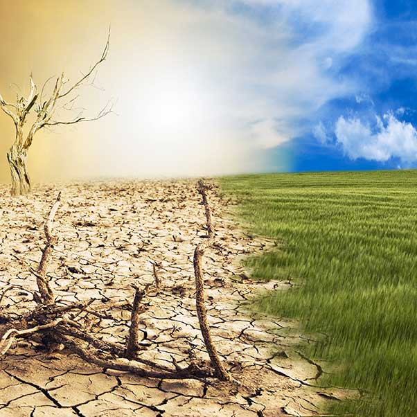Introducing our research strength focus: Sustainability and Climate Change Resilience
