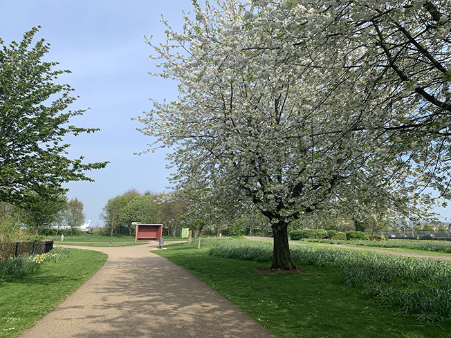 New review finds that better access to green spaces has a beneficial impact on anxiety and depression in young people, aged 14 to 24 years.